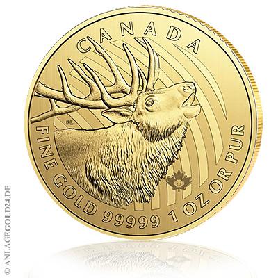 Elch Goldmünze 2017 aus der Call of the Wild Serie aus Kanada kommt – 1oz Gold