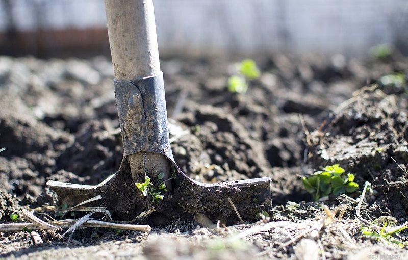 Gold im Garten vergraben? 9% der Deutschen würden dies tun