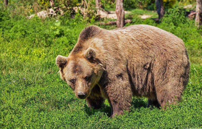 Goldpreis: 7jährige Bärenphase zu Ende?